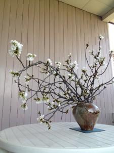 ロワゼール桜1